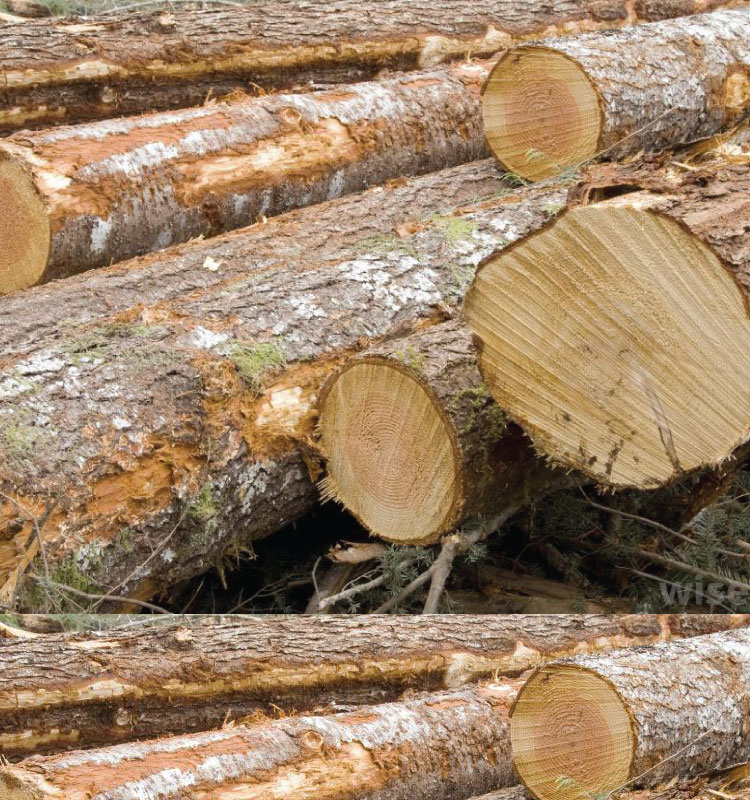 Timber supplier from africa - African Product Warehouse
